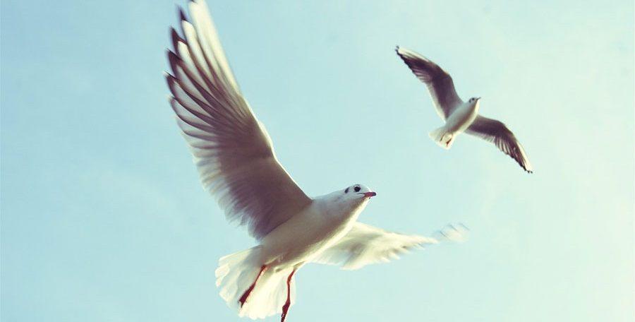 3-Fast-ausgestorbene-Vögel
